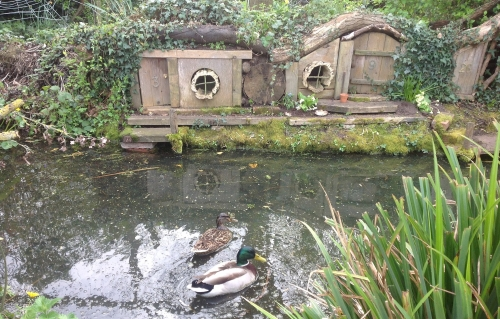 Duck Pond and Insect Hotel in the Spring