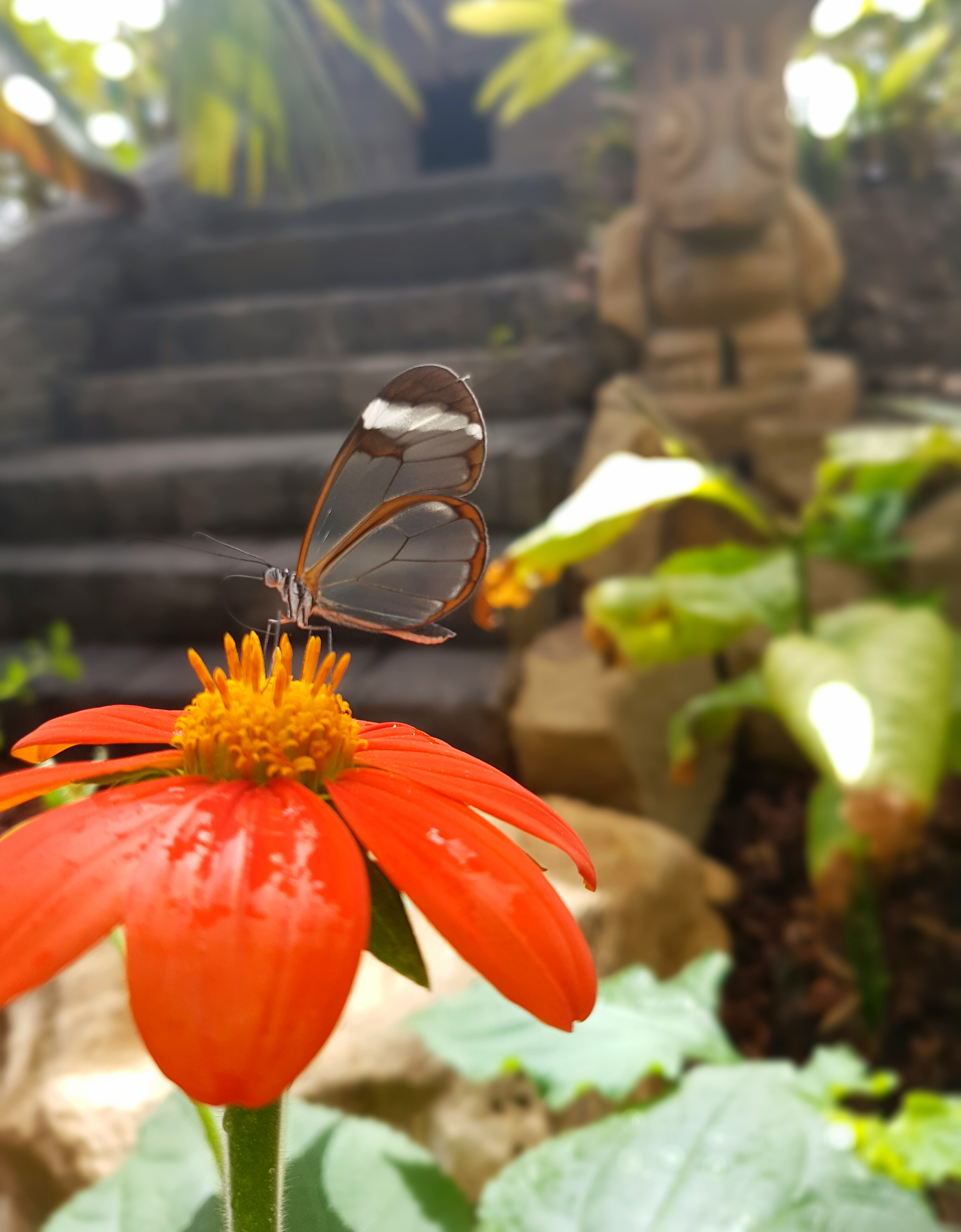 Re-opening of Stratford Butterfly Farm