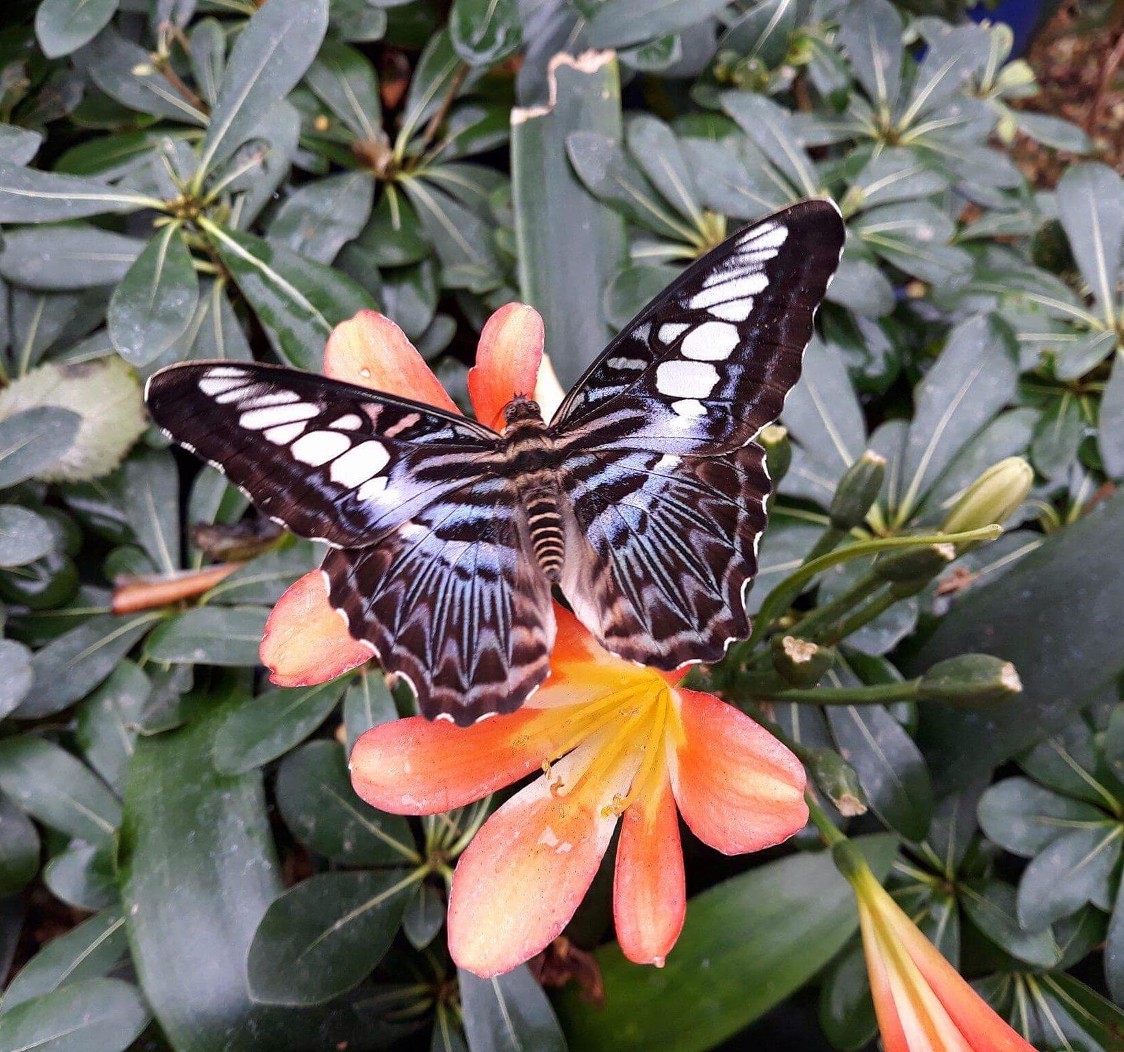 Home — Stratford Butterfly Farm